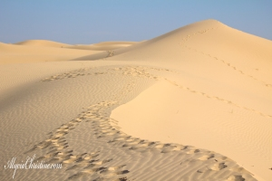 Dune_Trek-AC4x6