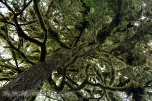 Tree_Fuzz-4x6AC