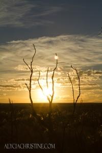 Twig_Sunset-4x6AC