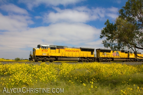 Union_Pacific_Yellow_1_AC4x6