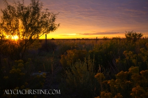 Scrub_Brush_Sunrise-AC4x6