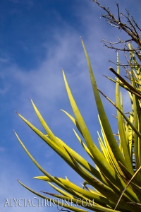 Cactus_Colors-4x6AC
