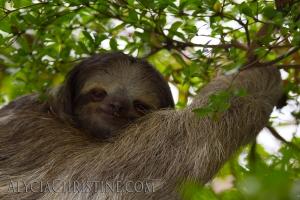 Sloth_Smiles-4x6AC